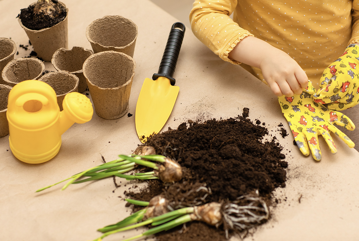 Ergo_0001_hands-of-child-planted-indoor-flower-bulbs-seeds-at-home